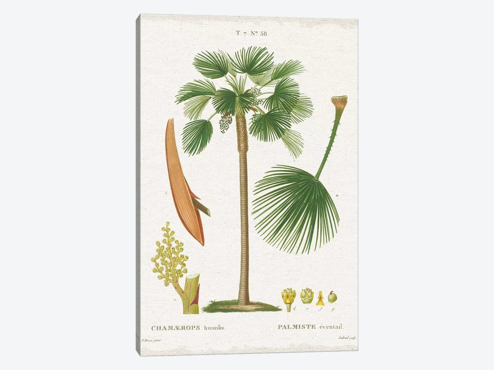 Island Botanicals I by Wild Apple Portfolio 1-piece Canvas Art Print
