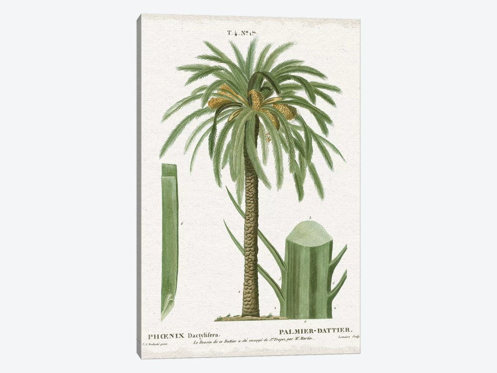 Island Botanicals II by Wild Apple Portfolio 1-piece Canvas Wall Art