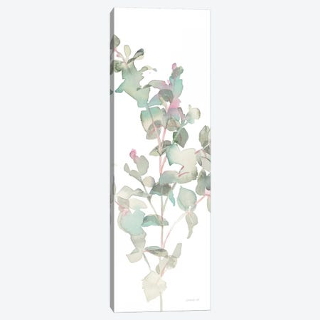 Eucalyptus On White II Canvas Print #WAC8399} by Danhui Nai Canvas Print