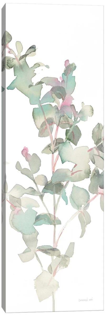 Eucalyptus On White II Canvas Art Print