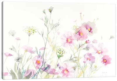Queen Anne's Lace And Cosmos On White I Canvas Art Print
