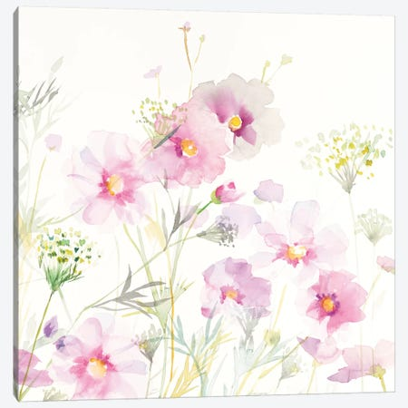 Queen Anne's Lace And Cosmos On White II Canvas Print #WAC8403} by Danhui Nai Canvas Art Print