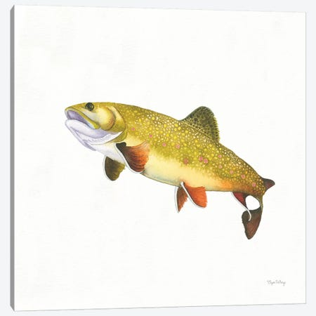 Gone Fishin': Brookie Trout Canvas Print #WAC8428} by Elyse DeNeige Canvas Print