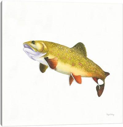 Gone Fishin': Brookie Trout Canvas Art Print