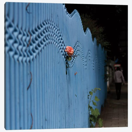 Rose On Pentonville Canvas Print #WAC8507} by Keri Bevan Canvas Art Print