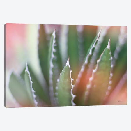 Dream Desert IV Canvas Print #WAC8629} by Sue Schlabach Canvas Print