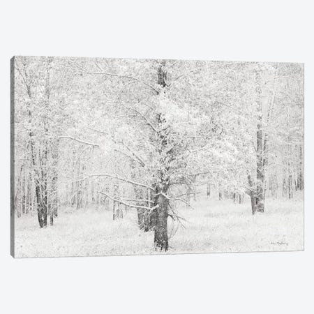 Snow Covered Cottonwood Trees Canvas Print #WAC8667} by Alan Majchrowicz Canvas Wall Art