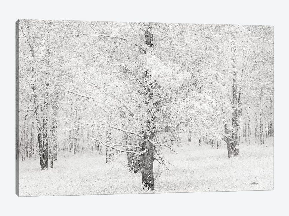 Snow Covered Cottonwood Trees by Alan Majchrowicz 1-piece Canvas Artwork