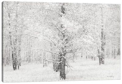 Snow Covered Cottonwood Trees Canvas Art Print