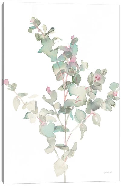 Eucalyptus II, White Canvas Art Print