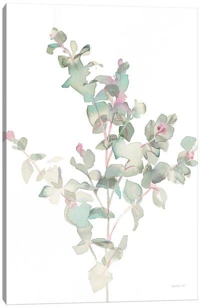 Eucalyptus II, White Canvas Art Print