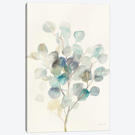 Eucalyptus III Canvas Print #WAC8677} by Danhui Nai Art Print