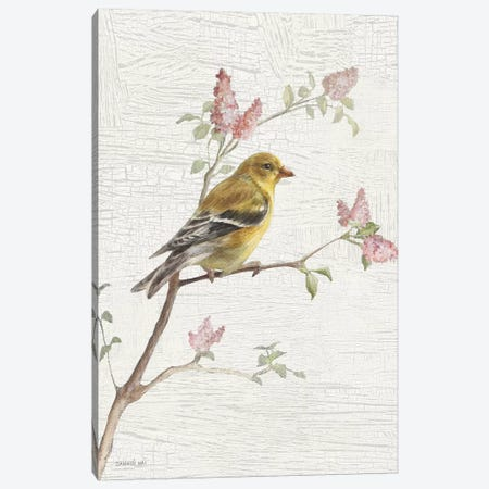 Female Goldfinch, Vintage Canvas Print #WAC8679} by Danhui Nai Canvas Art