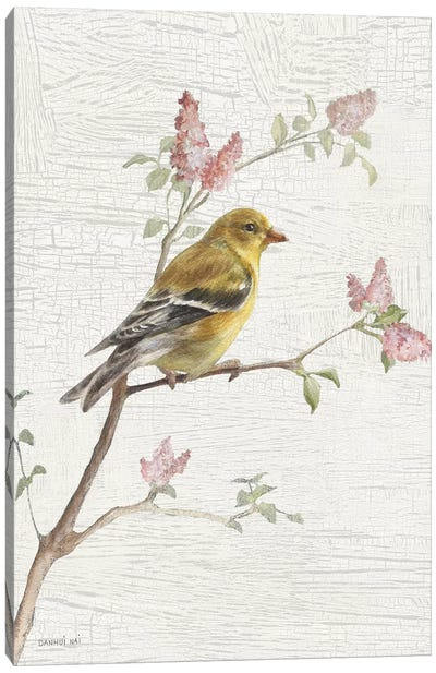 Female Goldfinch, Vintage Canvas Art Print