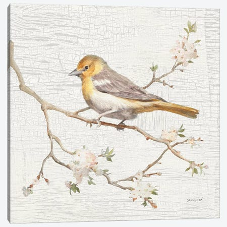 Northern Oriole, Vintage Canvas Print #WAC8681} by Danhui Nai Canvas Art Print