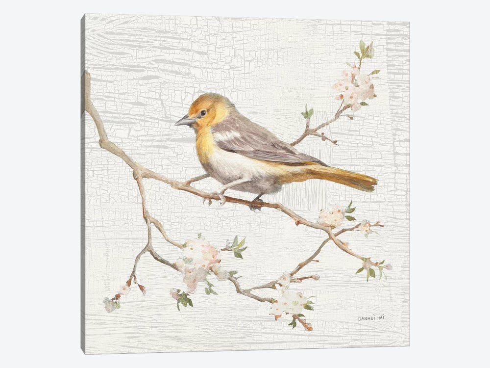 Northern Oriole, Vintage by Danhui Nai 1-piece Canvas Art