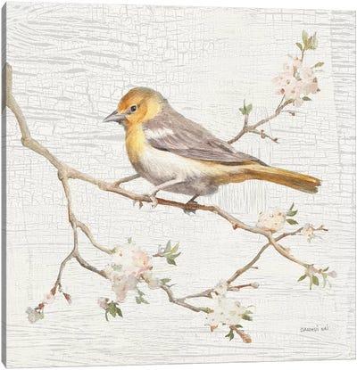 Northern Oriole, Vintage Canvas Art Print
