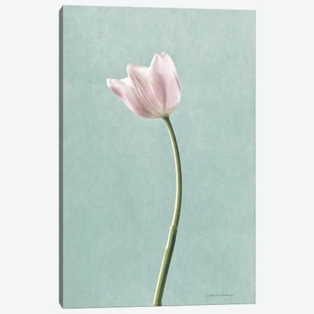 Light Tulips I Harbor Gray Canvas Print #WAC8683} by Debra Van Swearingen Art Print