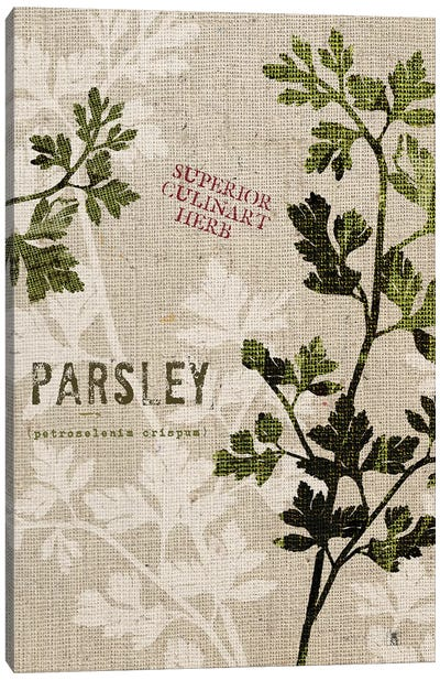 Organic Parsley, No Butterfly Canvas Art Print
