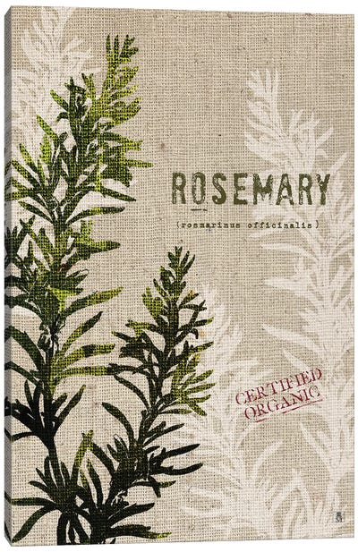 Organic Rosemary, No Butterfly Canvas Art Print