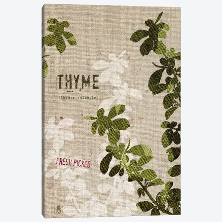 Organic Thyme, No Butterfly Canvas Print #WAC8737} by Studio Mousseau Canvas Artwork