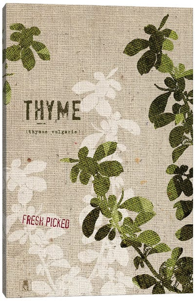 Organic Thyme, No Butterfly Canvas Art Print
