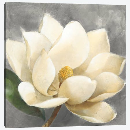 Magnolia Blossom On Gray Canvas Print #WAC8781} by Albena Hristova Canvas Artwork