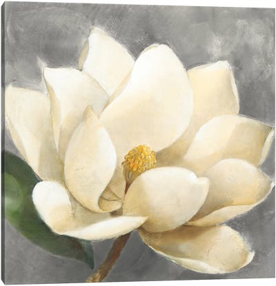 Magnolia Blossom On Gray Canvas Art Print