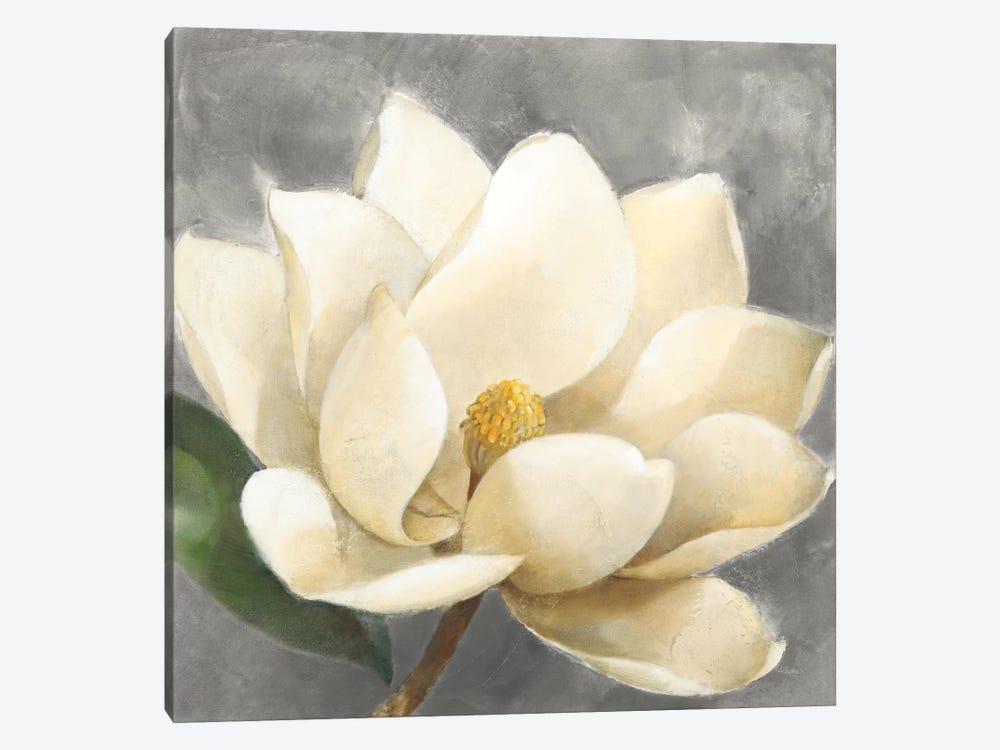 Magnolia Blossom On Gray by Albena Hristova 1-piece Canvas Print