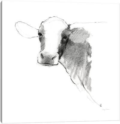 Cow II Dark Square Canvas Art Print