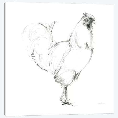Rooster II Dark Square Canvas Print #WAC8788} by Avery Tillmon Canvas Art