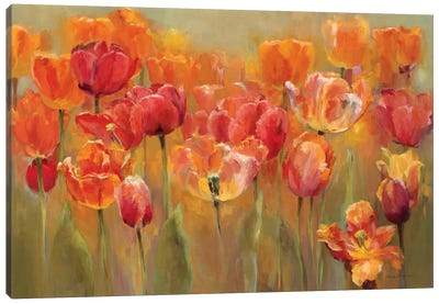 Tulips in the Midst III  by Marilyn Hageman Canvas Art Print