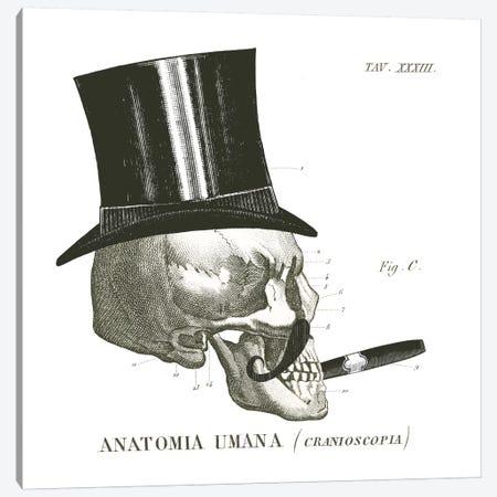 Dandy Bones III Canvas Print #WAC8919} by Sue Schlabach Art Print