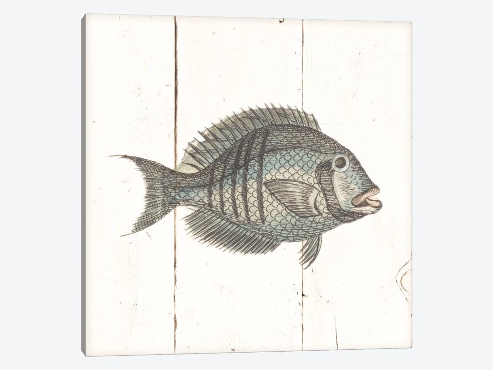 Fish Sketches I Shiplap by Wild Apple Portfolio 1-piece Art Print