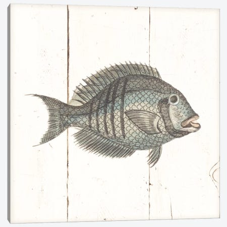 Fish Sketches I Shiplap Canvas Print #WAC8928} by Wild Apple Portfolio Canvas Wall Art
