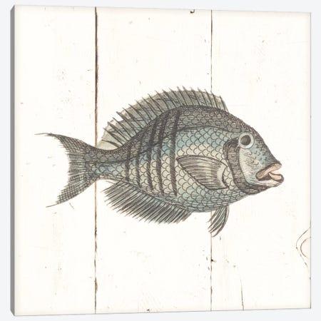 Fish Sketches I Shiplap Canvas Print #WAC8928} by Wild Apple Portfolio Canvas Wall Art