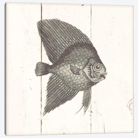 Fish Sketches III Shiplap Canvas Print #WAC8930} by Wild Apple Portfolio Canvas Art Print