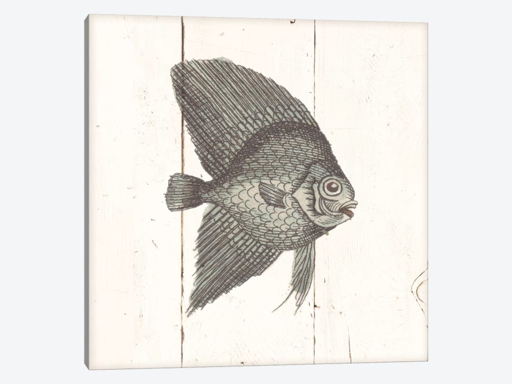 Fish Sketches Iii Shiplap Canvas Art By Wild Apple Portfolio Icanvas