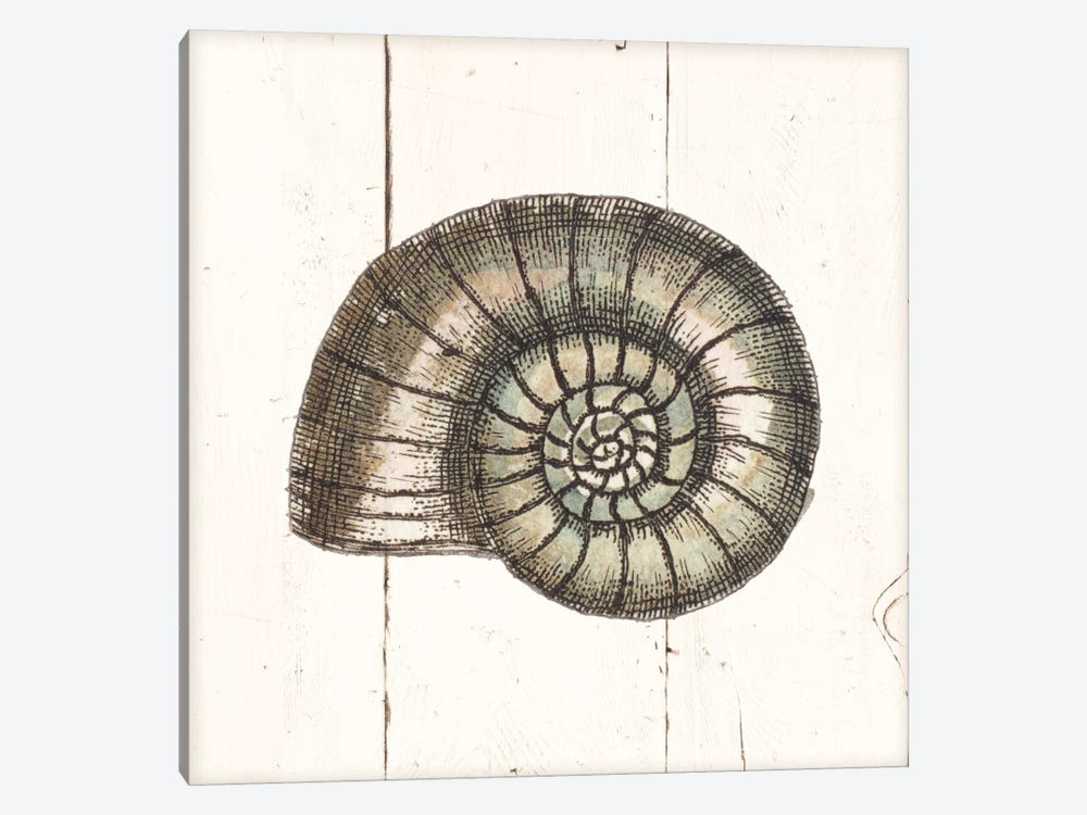 Shell Sketches I Shiplap by Wild Apple Portfolio 1-piece Canvas Art