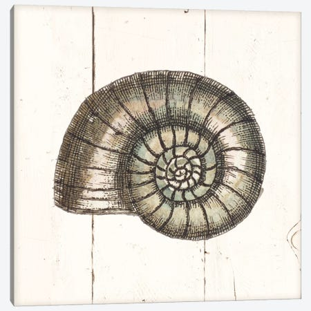 Shell Sketches I Shiplap Canvas Print #WAC8936} by Wild Apple Portfolio Canvas Artwork