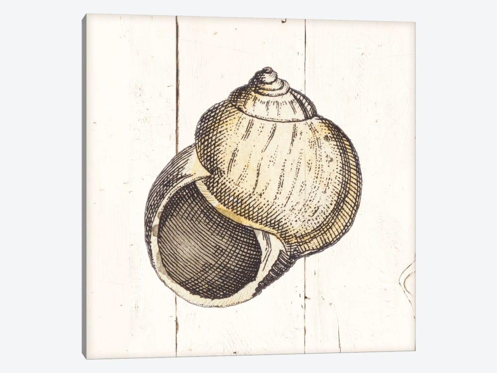 Shell Sketches II Shiplap by Wild Apple Portfolio 1-piece Canvas Print