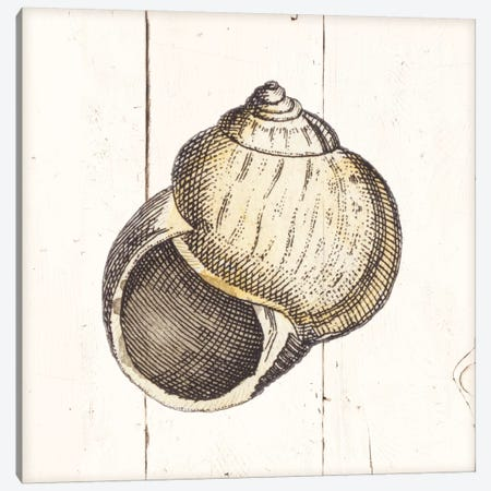 Shell Sketches II Shiplap Canvas Print #WAC8937} by Wild Apple Portfolio Canvas Artwork