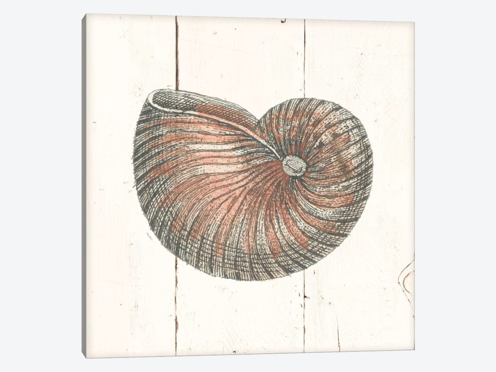 Shell Sketches III Shiplap by Wild Apple Portfolio 1-piece Canvas Artwork