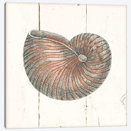 Shell Sketches III Shiplap Canvas Print #WAC8938} by Wild Apple Portfolio Art Print