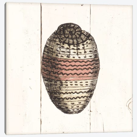 Shell Sketches IV Shiplap 3-Piece Canvas #WAC8939} by Wild Apple Portfolio Canvas Print