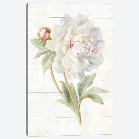 June Blooms II Canvas Print #WAC8985} by Danhui Nai Art Print