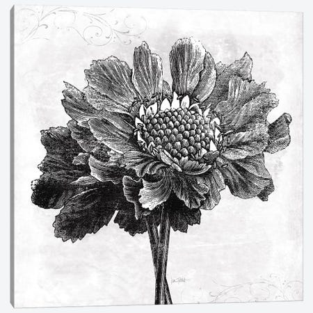 Spa Botanical I, B&W Canvas Print #WAC9009} by Katie Pertiet Canvas Wall Art
