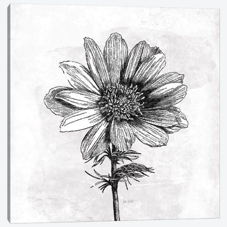 Spa Botanical IV, B&W Canvas Print #WAC9010} by Katie Pertiet Art Print