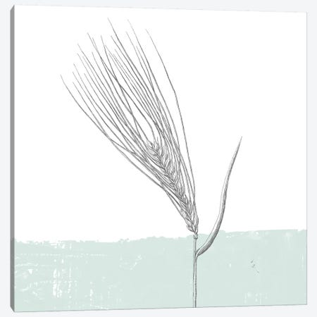 Barley Canvas Print #WAC9029} by Sarah Adams Canvas Art