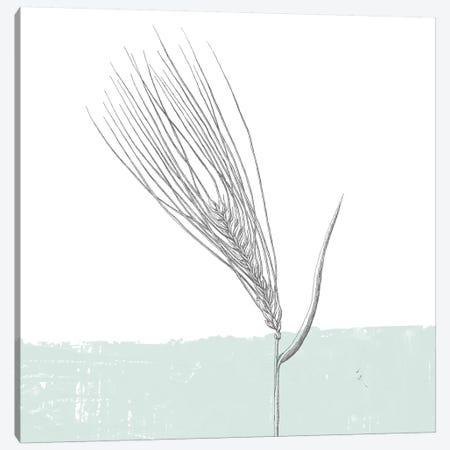 Barley Canvas Print #WAC9029} by Sarah Adams Canvas Art